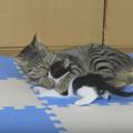 【人も猫も結局】おばあちゃんは孫が大好き!でも時々、娘。