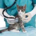 猫のペット保険を徹底比較!おすすめランキング