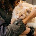 猫がなかなか懐かない理由