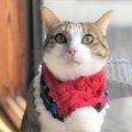 LAYLAの12猫占い【12/21~12/27】のあなたと猫ちゃんの運勢