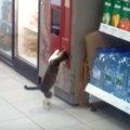 「小銭はどこにゃ!?」自販機の返却口でガサゴソする猫…これがホントのネコ…