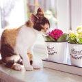 猫に安全な花5選!食べても嗅いでも大丈夫な種類