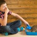 猫のうんちがくさい...考えられる病気とその他の症状