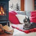 猫が寒がりな理由と震えている時の注意点