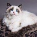 長毛種の猫!人気6選