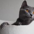 猫は完全室内飼いがオススメである11の理由