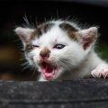 愛猫を見捨てないで!殺処分数を0頭にするためには……