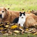 犬と猫の違いは?人間と歩んだ歴史から特徴を知る!
