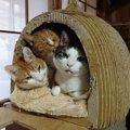 密です!ギュウギュウ詰めの仲良し三密猫の必死過ぎる顔に釘付け