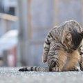 猫が体を舐める5つの意味