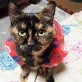 猫に洋服や帽子はストレス!気をつける事や代わりに楽しめる事