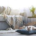 猫をワンルームの部屋で飼う時の4つのポイントと注意点