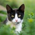 猫がムカデに刺された!主な症状と適切な対処法