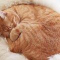 猫ちぐらの作り方を動画付きで徹底解説!
