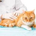 猫の腰が抜ける4つの原因と対処法
