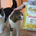 おいしくて見つめ合っちゃう?新しいフードを食べる猫さんたち!