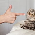 しつけで猫を叩くのはやめよう!飼い主さんにとっても危険です