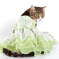 猫服を着せた方が良い理由と注意点