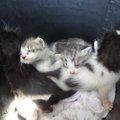 【野良猫の出産ブーム】春~夏、ボランティア泣かせの出産シーズン