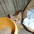 お家が無かったけど今は幸せ♡我が家に末っ子猫「だいず」がやってきた!