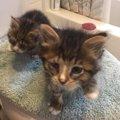 保護された子猫の兄弟…感染症で弱視の弟を兄は、かばうように寄り添い…
