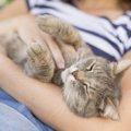 飼い主と一緒に寝てる猫の「睡眠の質」は大丈夫?