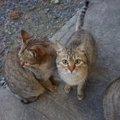 野良猫と仲良くなれる!?5つのステップと挨拶の方法