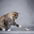 猫とハムスターは共存は可能?仲良くさせる方法について