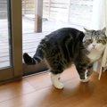 「サンダル泥棒~!」何もできない事が歯がゆい猫さん