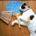 猫に絶対してはいけない『間違った暑さ対策』3選!ついついやってし…