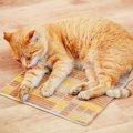猫の予期せぬ事故に注意!動物病院で起きた4つの事例