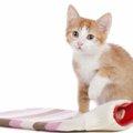 猫に湯たんぽを使う時の注意点とメリット
