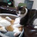 猫の里親になるための条件が厳しい理由3つ