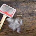 猫の毛が抜ける原因。病気の可能性も!