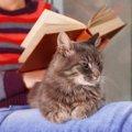 妊婦が猫と暮らす上で注意すべき病気と6つの注意点