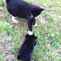 「静かにするにゃ!」子犬への指導がぬかりない猫様