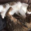 仲良く抱き合う猫達。その裏で犠牲になった者がいた…