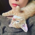 猫がやたらと頭をスリスリするときの可愛い理由
