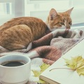 吉祥寺は猫とゆかりが深い街?その理由とおすすめ猫カフェ
