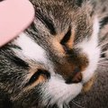 癒やされる♡猫じゃすりでなでられる猫さん!