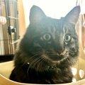 愛猫に聞いてみた「私に噛みつくのはなぜ?」|Laylaのペットリーディ…