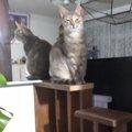 部屋の間仕切りを改造して『猫階段』作ってみました part2