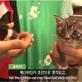 1匹の母猫が産んだ2匹の大きさの違う子猫たち