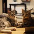 猫が『口を開けずに鳴く』ときの気持ち3つ