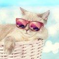 猫との旅行での必要なものと注意点とは