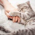 猫は新型コロナに対して、ほかの動物より免疫力が弱いって本当?