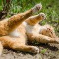 秋の季節に注意したい猫への5つのケア