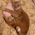 猫に「けりぐるみ」を与えることのメリット3つと選び方