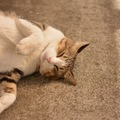猫が眠い時に見せる7つの仕草や体の変化