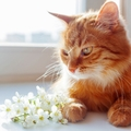猫の介護とは?食事やトイレなどあらゆるケアが必要不可欠
